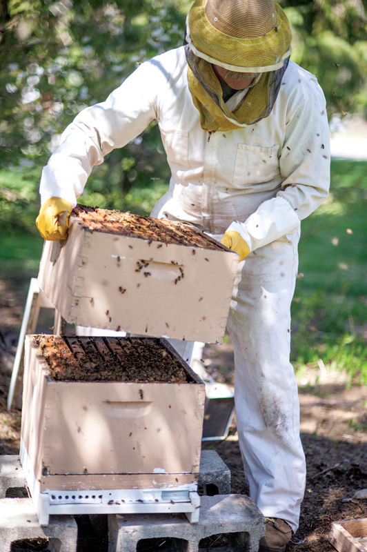 Keeping honey bees is a great gift to the environment.