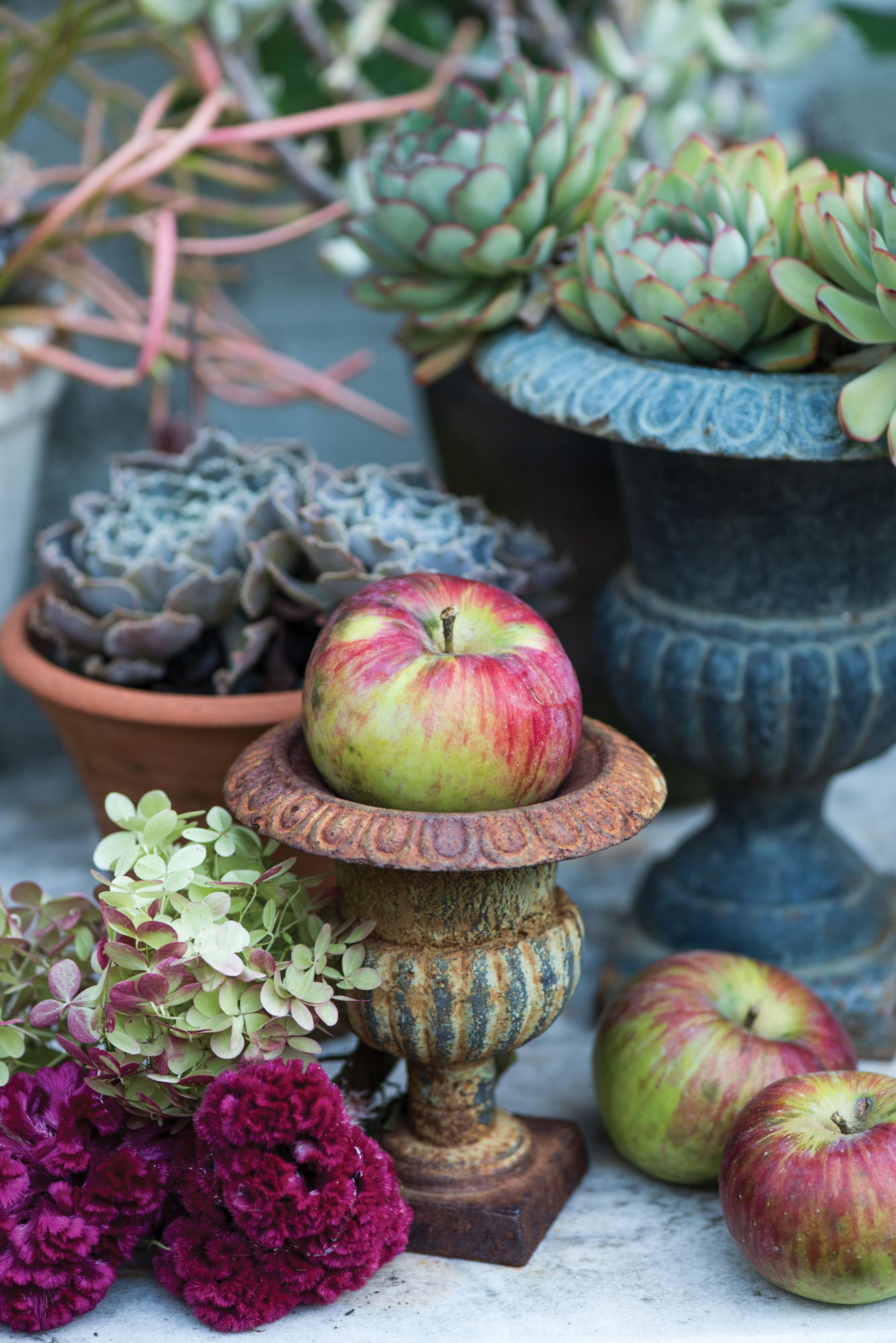 succulents in urns