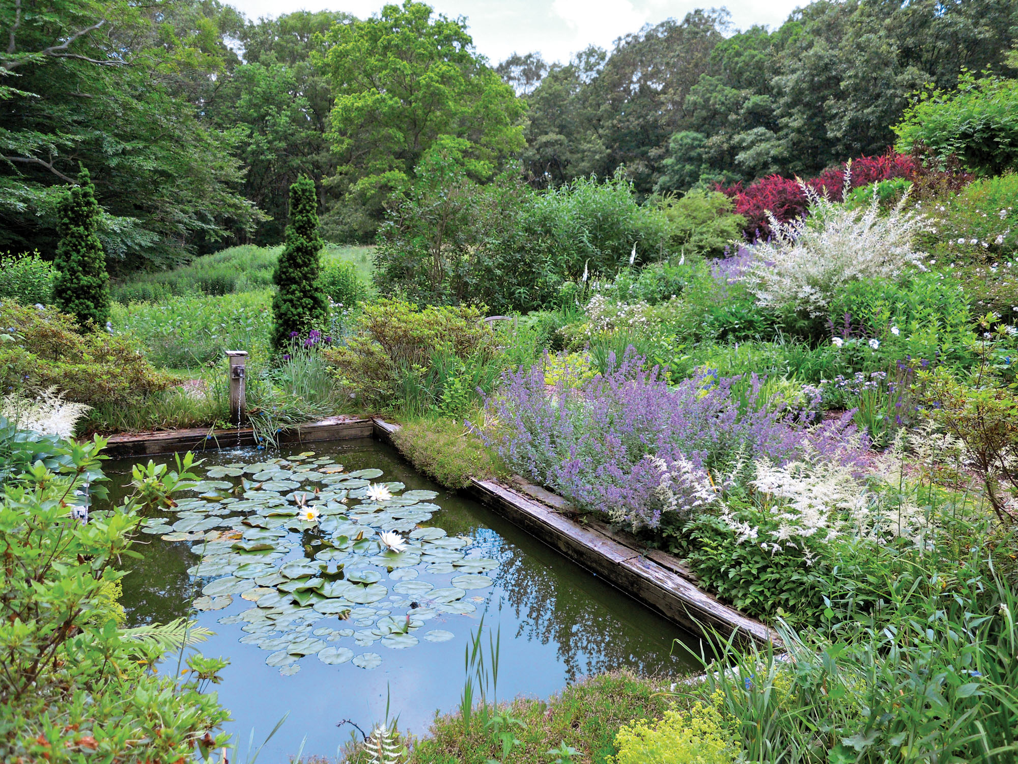 azaleas, astilbes, and blue catmint surround lily pond