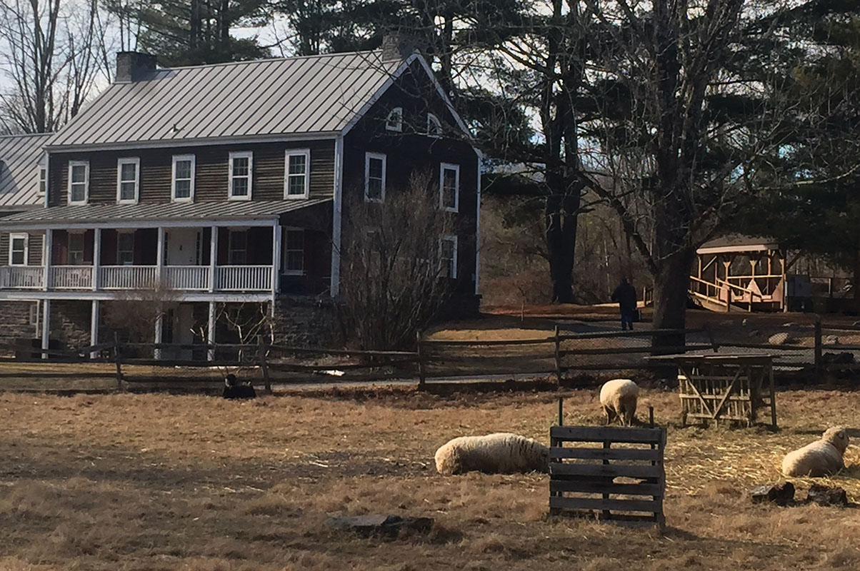 Sheep take their ease in front of the 18th-century Winchell Farmhouse.