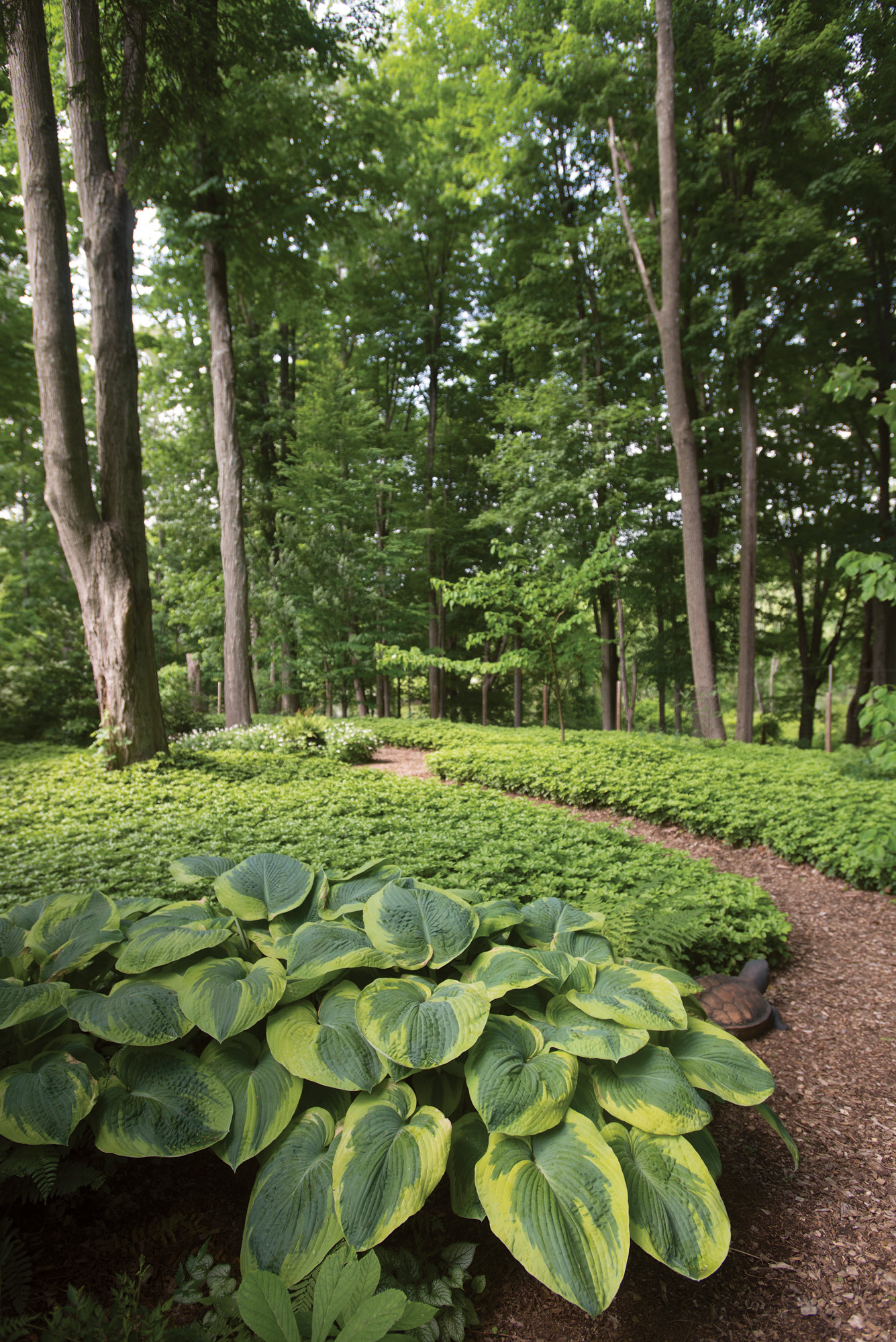 Cutting through an ocean of pachysandra, one path to the woodland has a 19th-century Pennsylvania redware turtle crawling at the periphery.