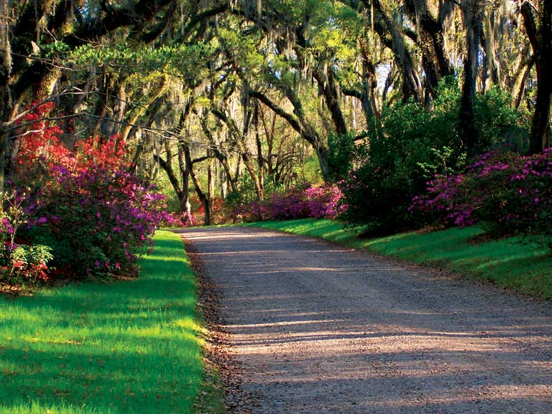 A long avenue lined with towering live oaks—peppered with Spanish moss and flowering shrubbery—was a staple of antebellum plantation garden design.