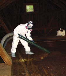 Proper precautions are necessary when cleaning guano. This crew wears suits and masks, and uses a HEPA vacuum.