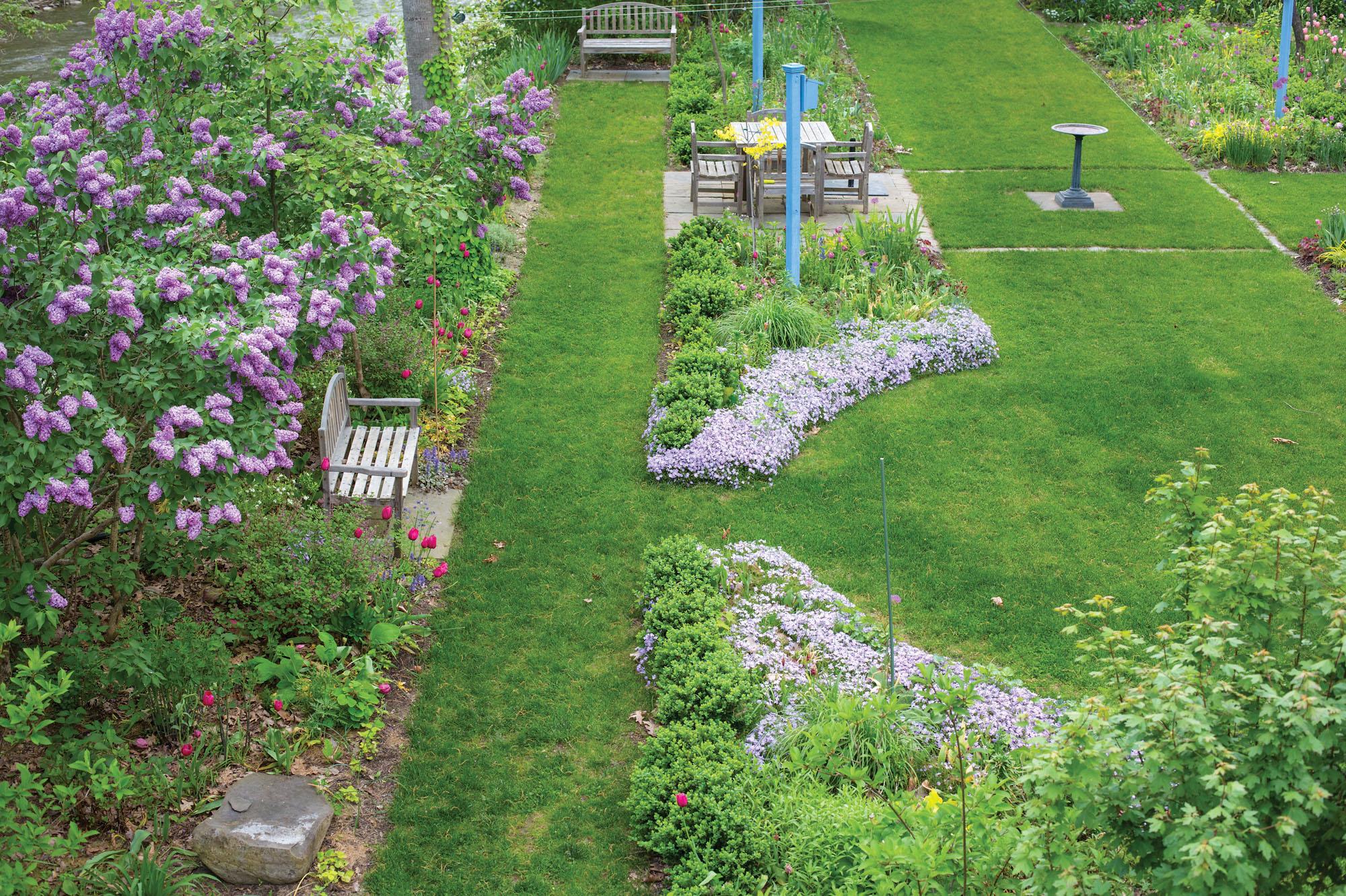 garden with lilacs