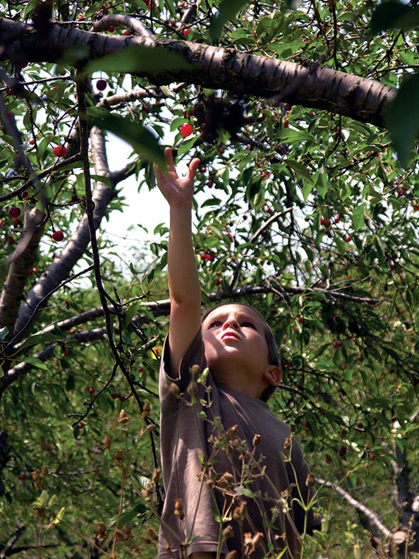 Cherry picking in summer. (Photo: Courtesy of DoorCounty.com)