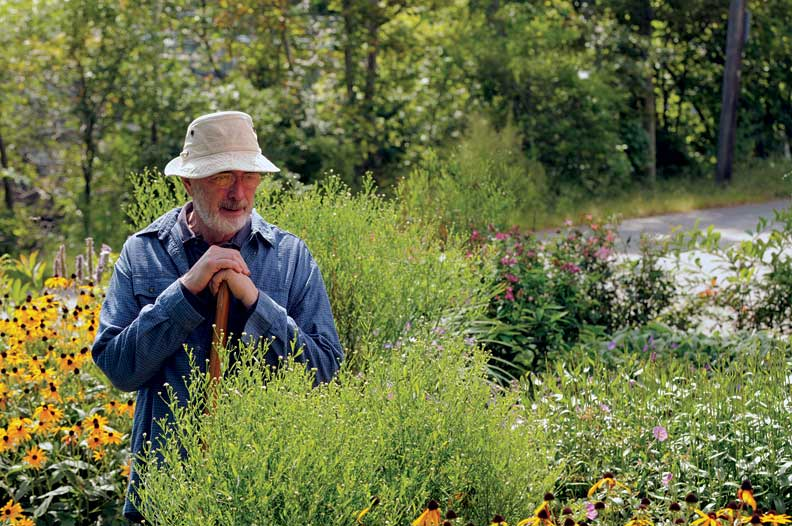 Homeowner Ed Emberly admires the just-blooming boltonia along the garden's central path.