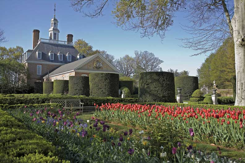 Neat rows of tulips bloom in the gardens of Colonial Williamsburg.