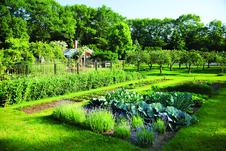 Concord Reuttgers garden 91_gn