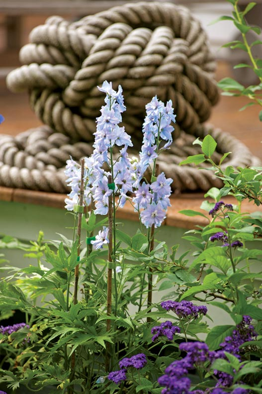 Delphinium fronts a Monkey's Fist knot in nautical rope.