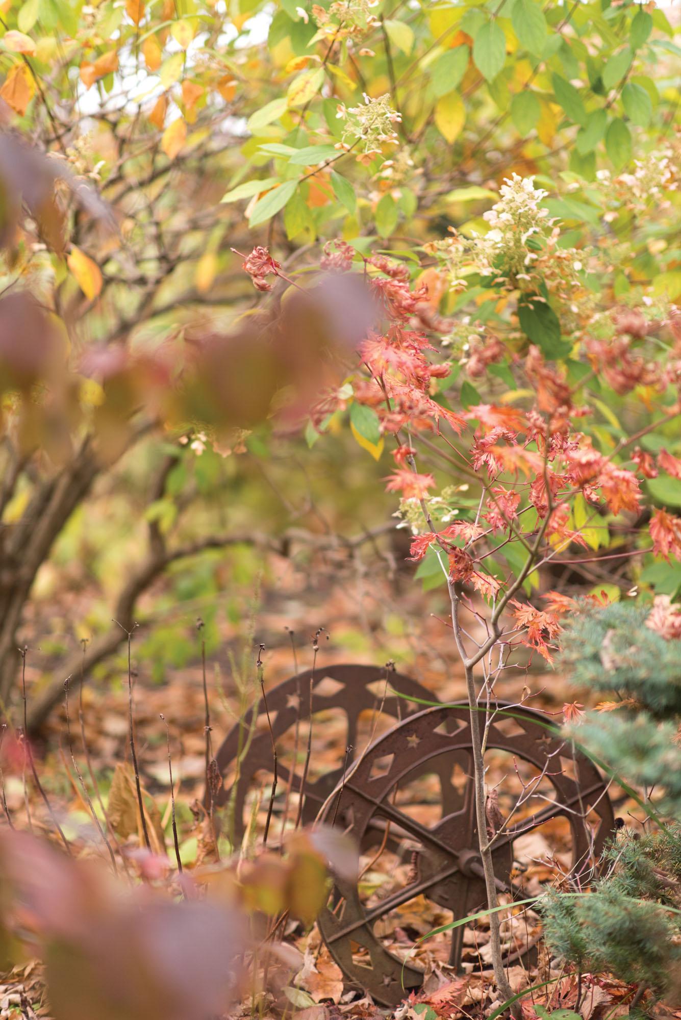 industrial wheel, Japanese maple