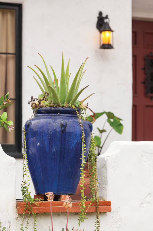 Drought-tolerant succulents were chosen for a pair of blue ceramic jugs.