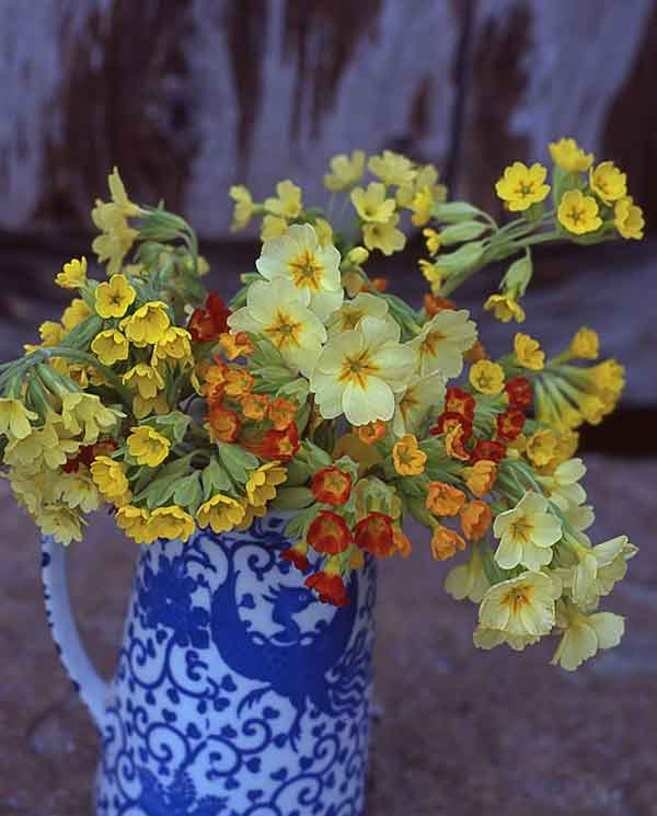 Enhancing an antique pitcher: a bouquet of various P. veris color strains and their hybrids.