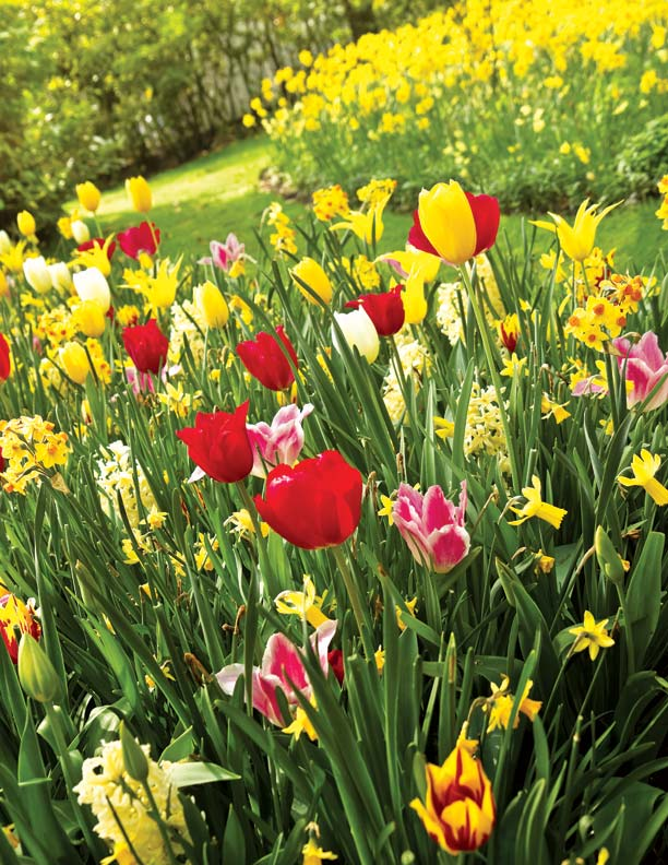 A mixed color palette such as red, yellow, and white offers a dramatic look in the yard.