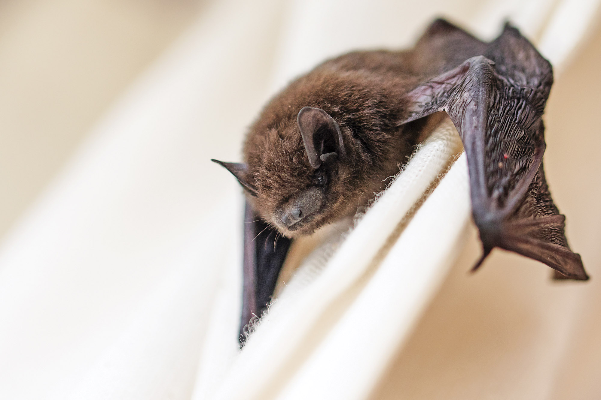 bat in old house