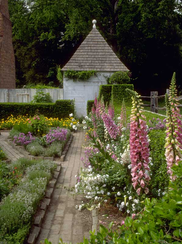 Foxgloves Sway Over Brick Edged Beds At The John Blair Garden In Colonial  Williamsburg.