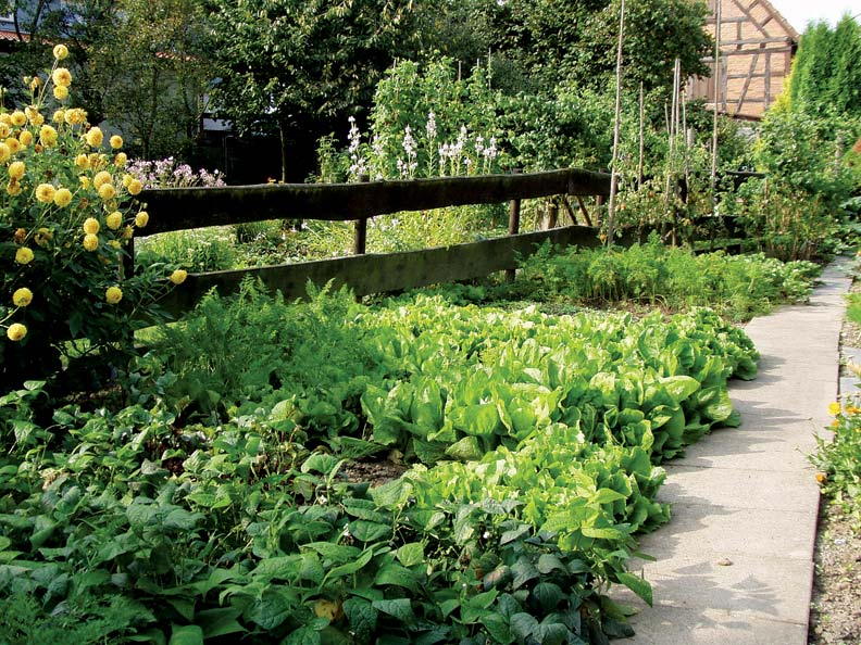Planting lettuce along with a cutting garden is a great way to save space in your landscape.