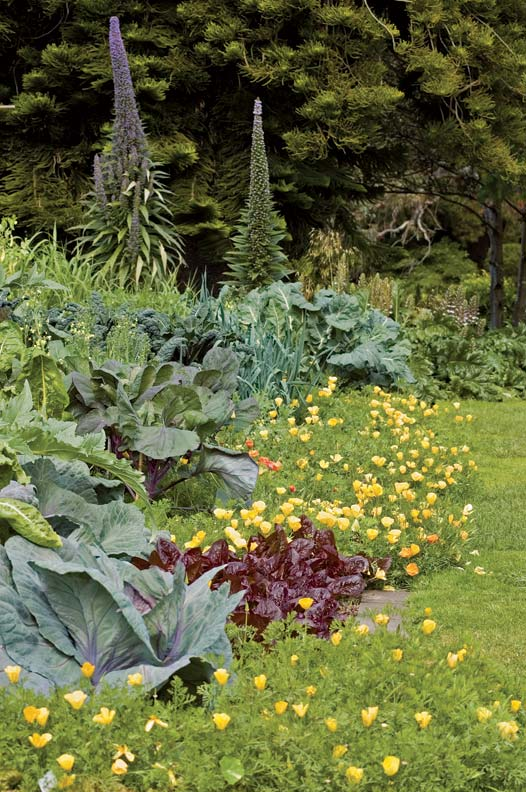 To maintain your mixed garden, harvest both your flowers and your vegetables.