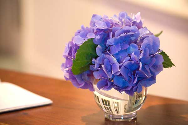 H. macrophylla 'Nikko Blue' cut short for a crystal globe vase: a single flower can be elegant.