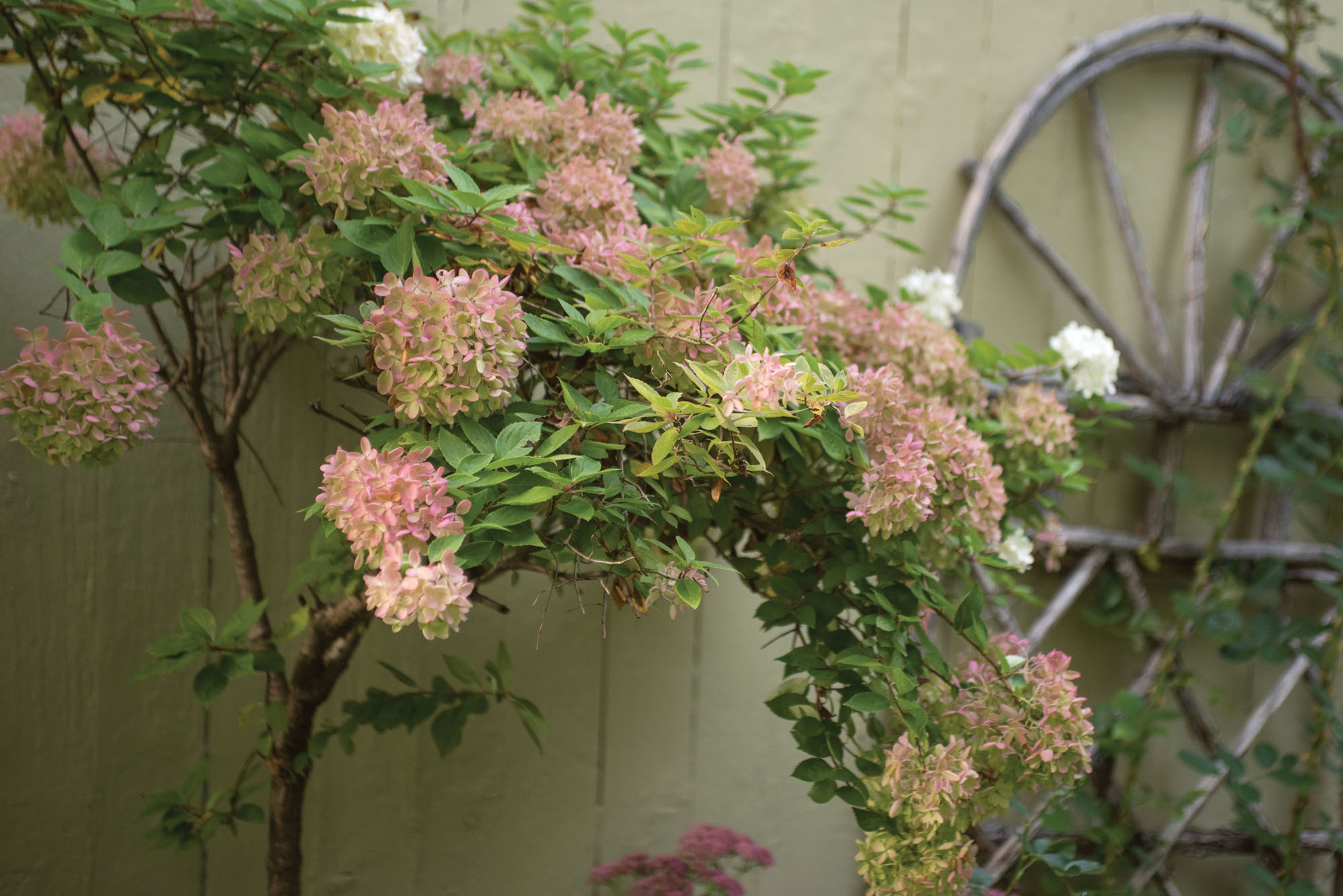 Tovah Martin's Autumn Garden at Furthermore