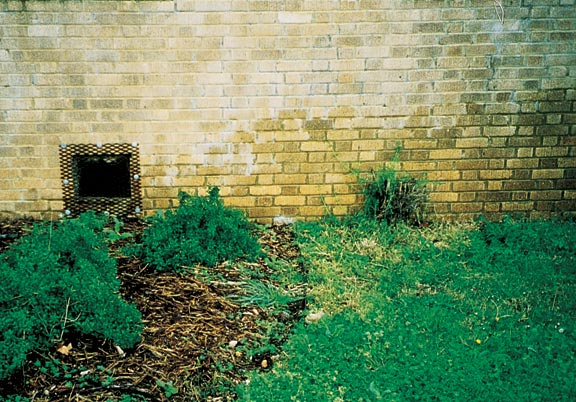 The number of possible moisture sources reaching your siding is endless, from an errant sprinkler to rising damp.