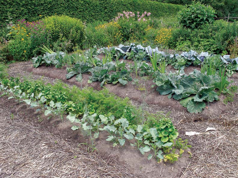 If you're just starting out, plant a small plot that you can eventually add onto as you become a more skillful gardener.