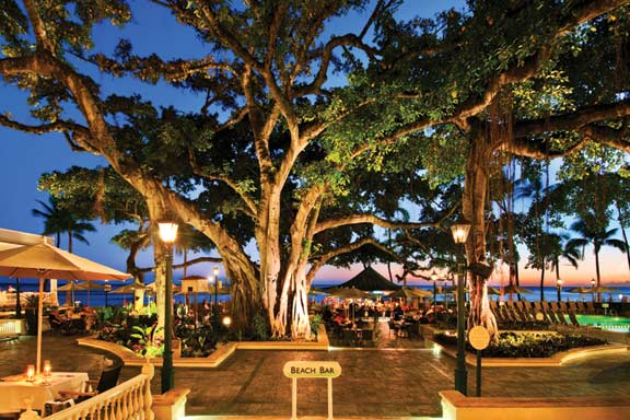 The famous banyan tree is thought to predate the hotel, and was among the first protected trees in Hawaii.