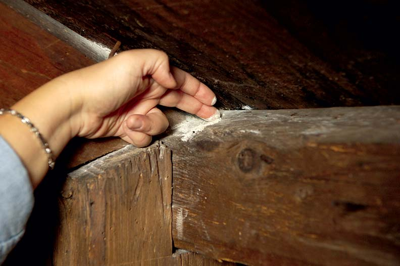 Thanks to roof leaks and faulty gutters, a healthy deposit of mildew is thriving at this attic-timber intersection.