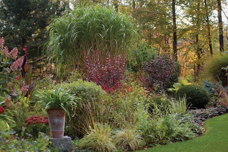 In one of the undulating borders, Hydrangea 'Pink Diamond,' Baptisia 'Purple Smoke,' Miscanthus 'Giganteus,' Buxus 'Green Mountain,' Persicaria 'Firetail,' a red canna, and a pair of sand cherries weave a tapestry of color.