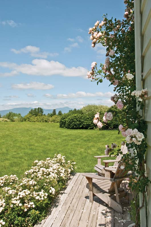 Open and closed porches and a roof deck were planned with an eye toward views. Here, 'New Dawn' roses frame views facing west.