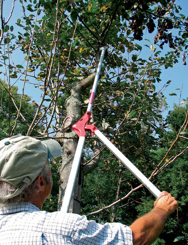 A long-reach lopper is ideal for small, high branches.