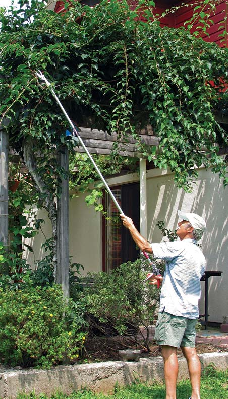 Long-reach shears make ladders obsolete for maintaining high vines.
