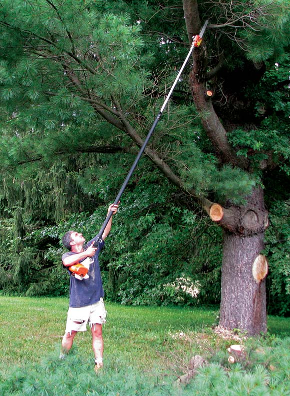 Larger-diameter branches require a saw; new pole-mounted saws are sturdier than previous models.