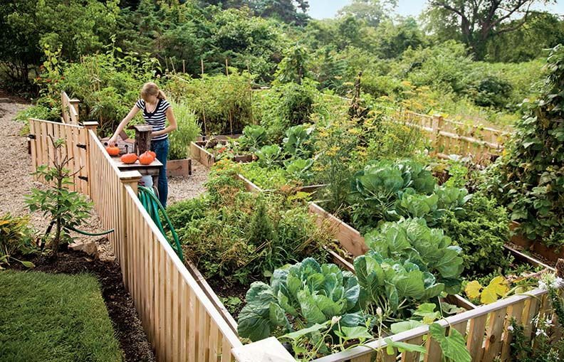 When creating a raised-bed garden, enclosing the space with fencing keeps deer at bay.