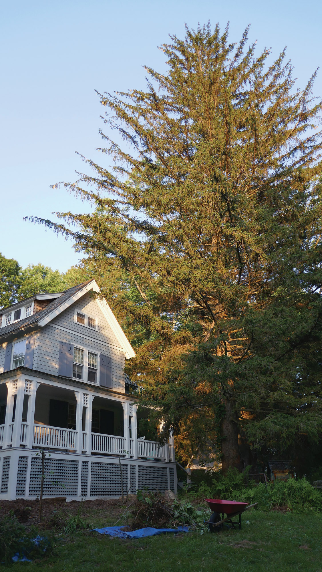 Trees Close to House
