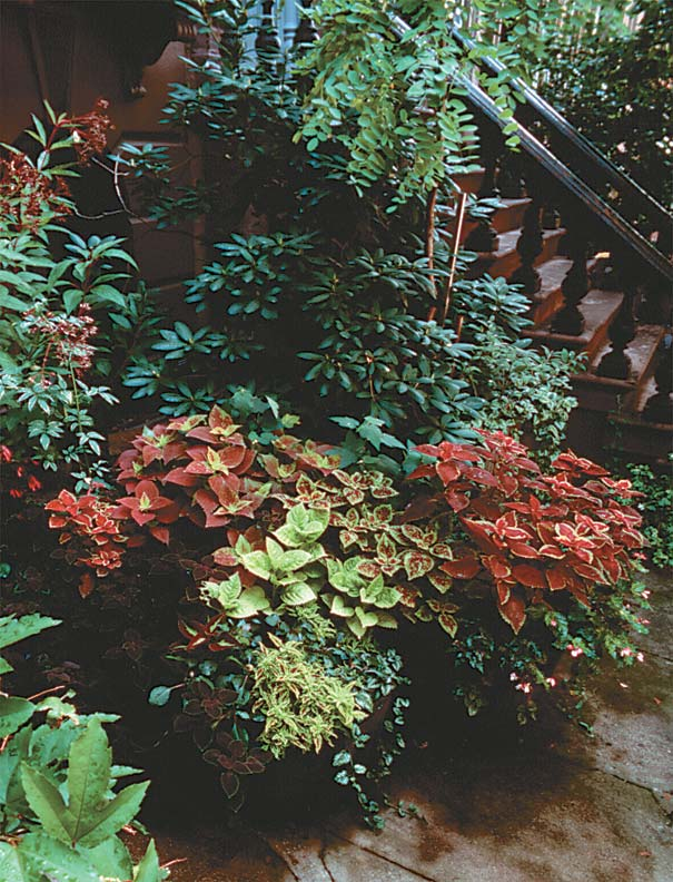 Foliage in an array of colors and textures makes a diverse showing by the steps of a brownstone.