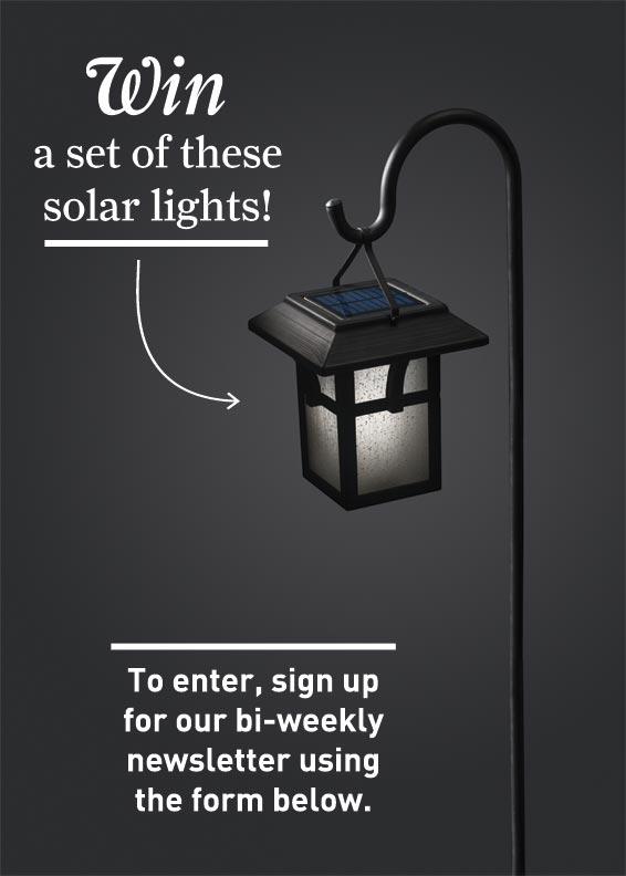 Portfolio solar light giveaway
