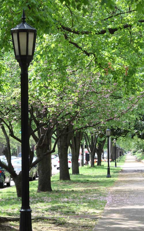 Streets are wide and parkways plentiful in this welcoming Southern city.