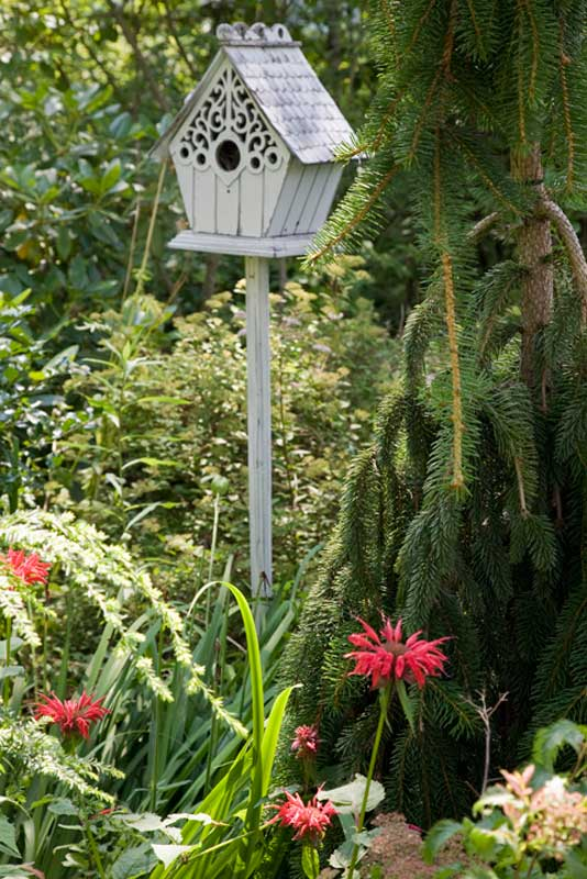 The birdhouse hosted a melodious (sometimes annoying) house wren for a couple of years.
