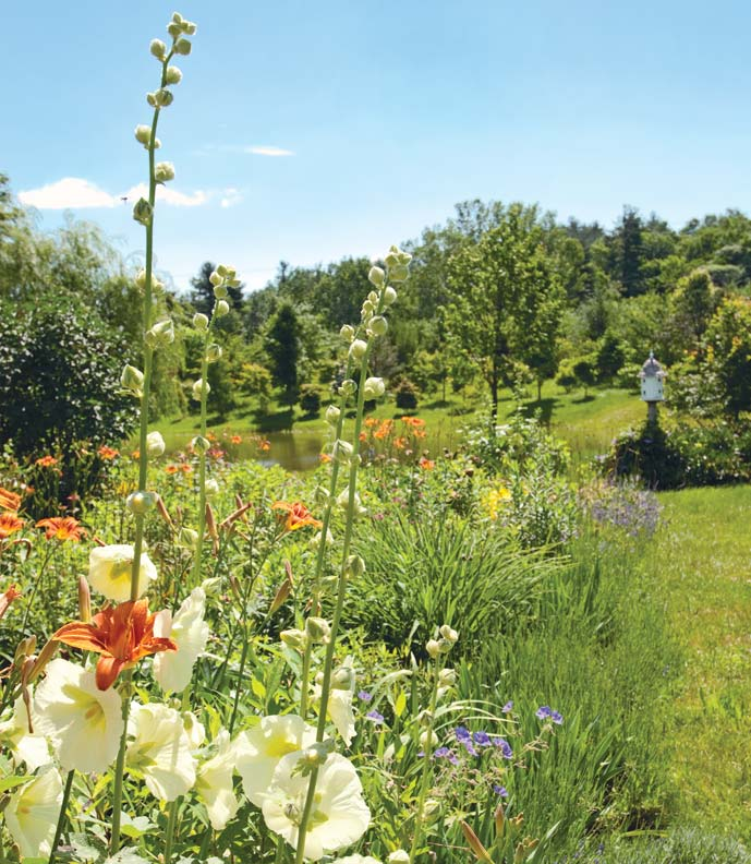 The cutting garden is filled with daylilies, irises, hollyhocks, and geraniums.