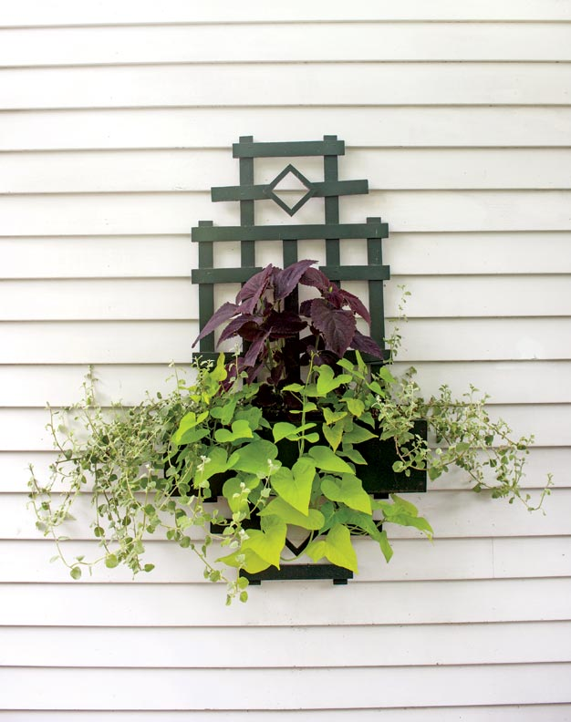 Trellises made of lattice strips hold container plants.