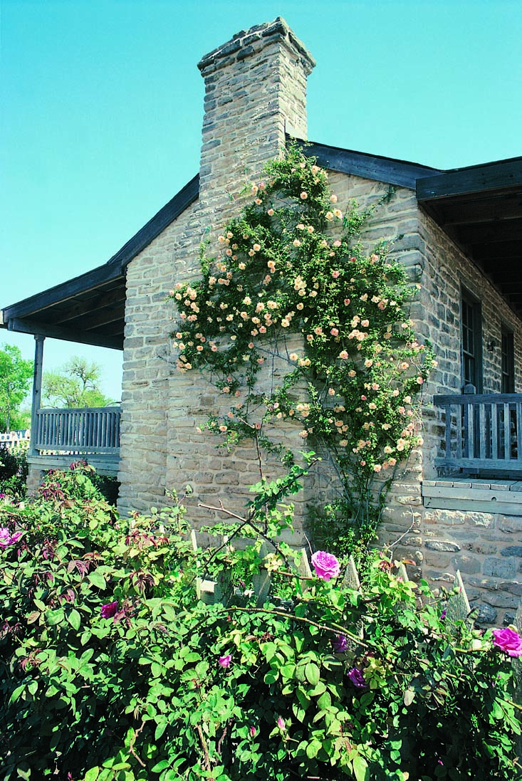 At the Antique Rose Emporium, display gardens are oriented around a restored late-19th-century farmhouse.