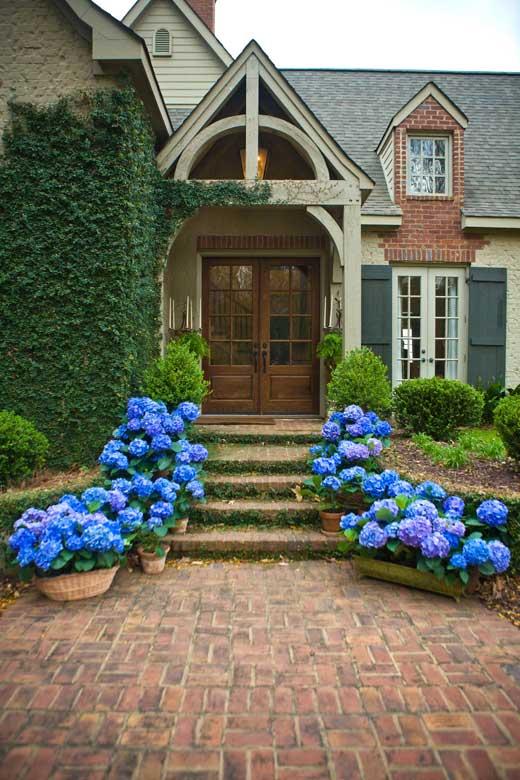 Best Hydrangeas for Historic Gardens - Restoration & Design for the ...