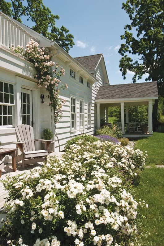 White 'Kent' roses run alongside the house toward the dining porch.